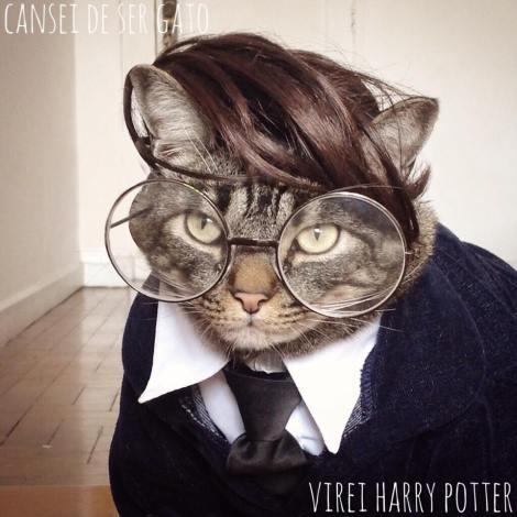 Na fanpage Cansei de ser gato, as autoras brincam com a criatividade, fantasiando seus gatos.